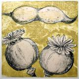 Seeds VI
